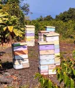 Kona Bee Hives overlooking the ocean
